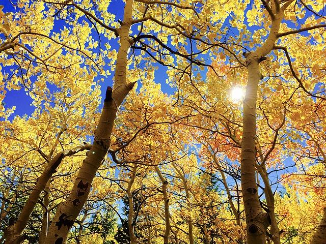 秋はキャンプデビューに最適!シーズン到来っ!!